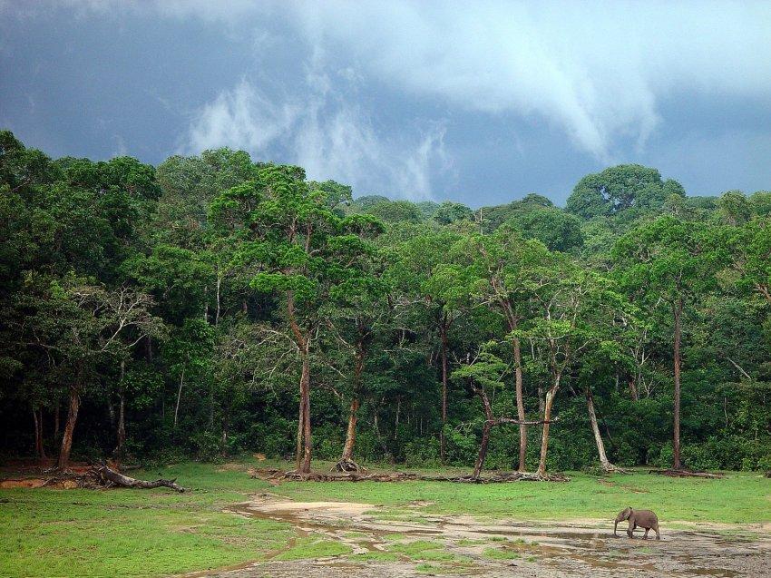 ООН б'є на сполох: найважливіші заходи щодо збереження біорізноманіття на межі зриву