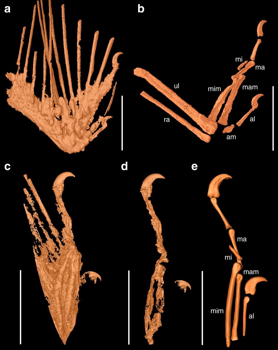 У М'янмі знайшли бурштин з пір'ям динозаврів