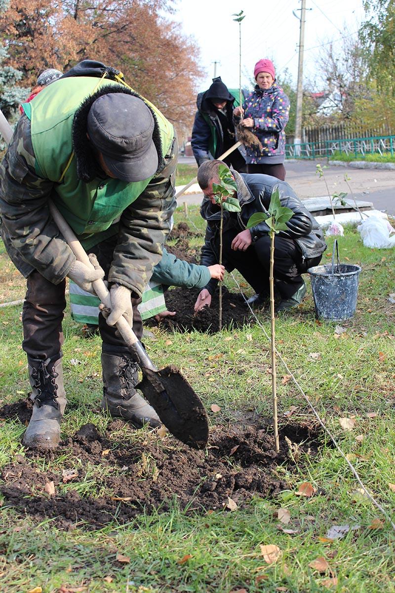 В Олександрівці висадили алею бузку