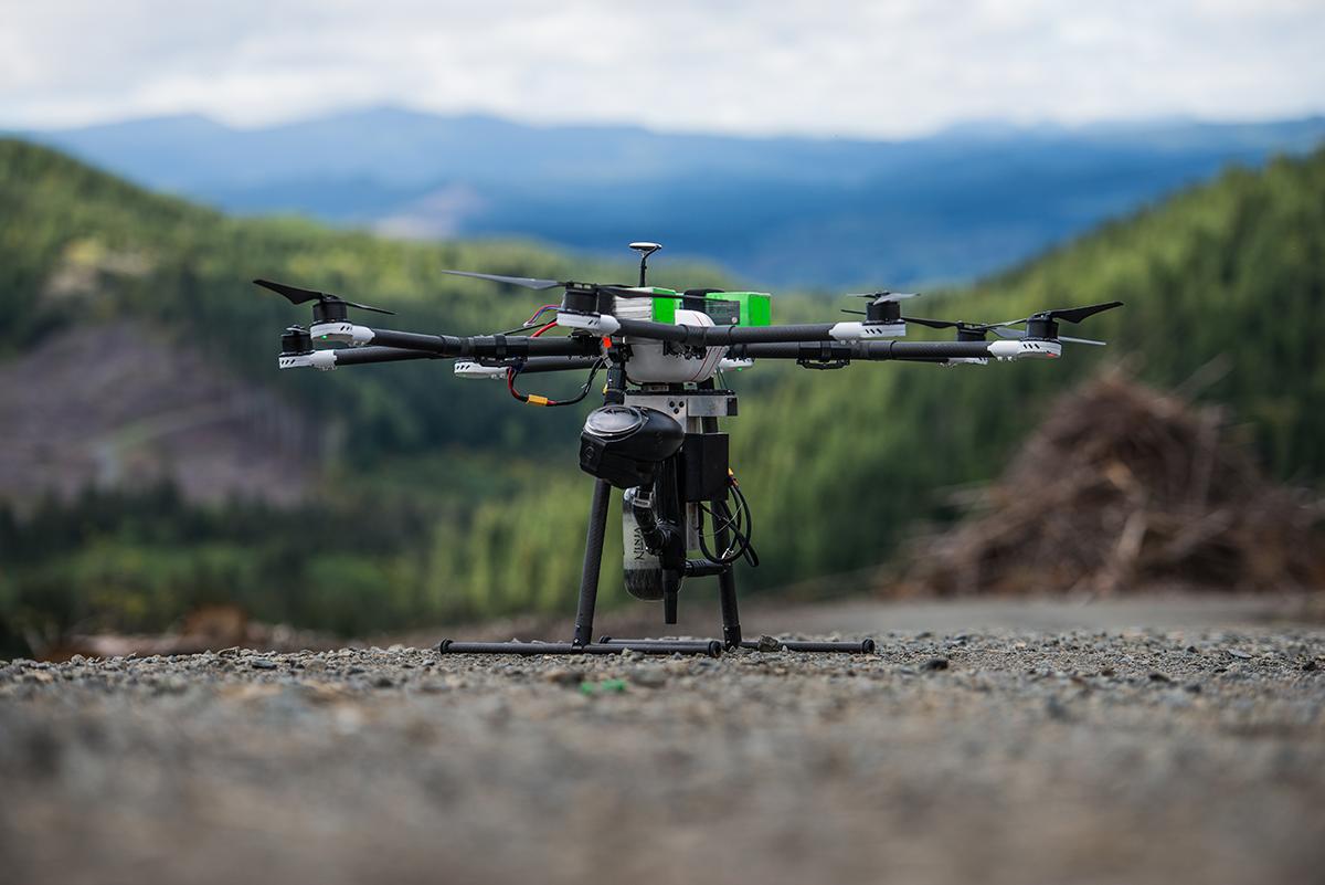 За допомогою дронів можна відновлювати ліс