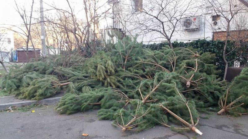 Якою є доля новорічних дерев після свят?